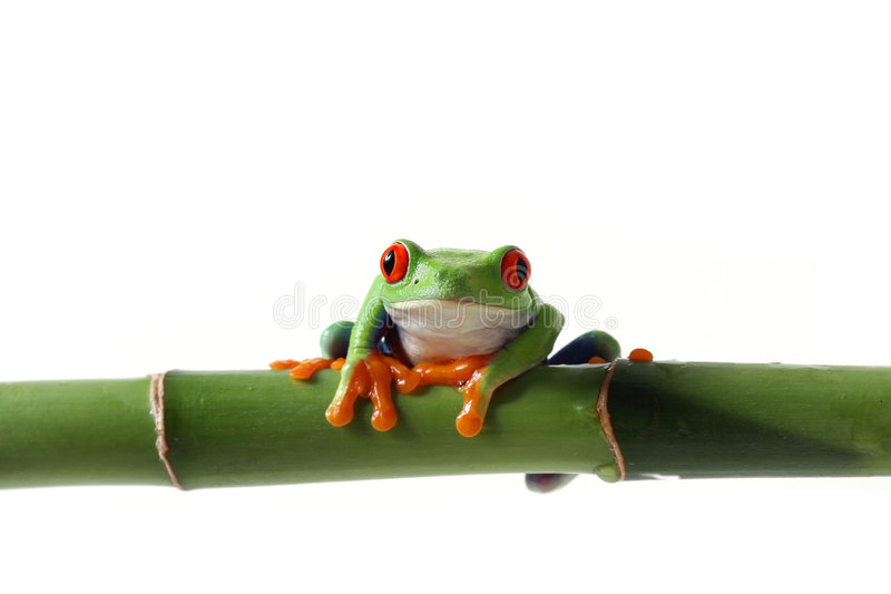 Vibrant Frog stock image