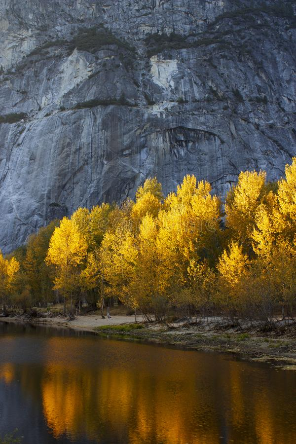 Vibrant golden sunlit trees reflected in water below rockface. Tranquil Fall scene with vibrant golden sunlit trees directly below rock face & reflected in a royalty free stock image
