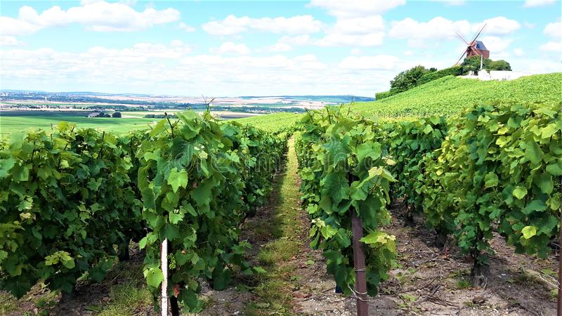 Champagne vineyard landscape with mill royalty free stock image