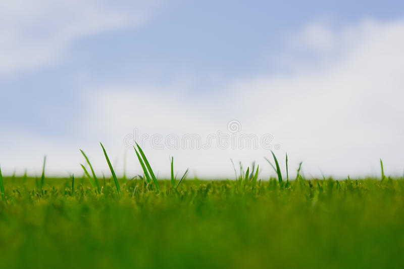 Download Vibrant green grass stock photo. Image of beautiful, land - 21143780