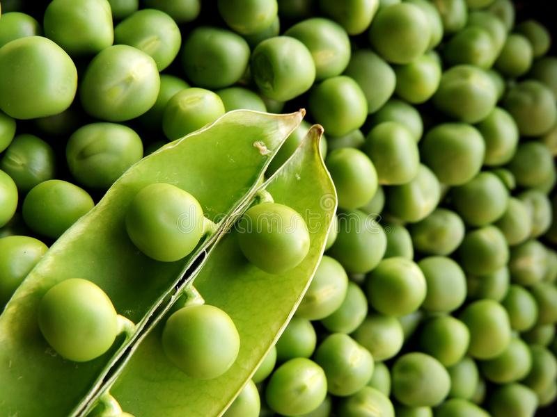 Vibrant green image of top view macro closeup of an opened green peas pod with peas placed on top diagonally at bottom left corner stock photos