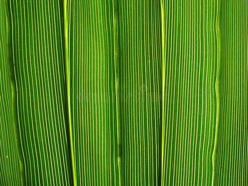 Download Vibrant Green Leaf Lines. Royalty Free Stock Images - Image: 6016369