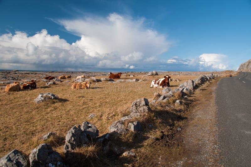 Vibrant  irish scenic rural landscape