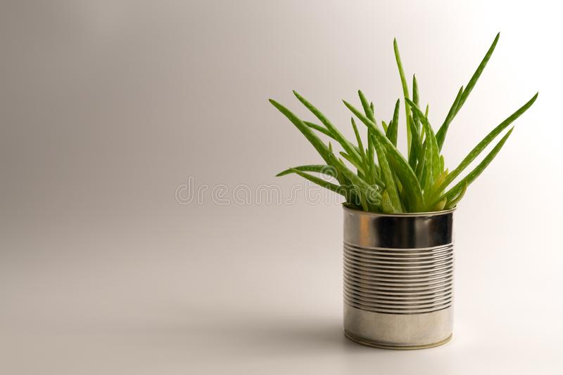 Vibrant, modern aloe vera plant in a simple and alternative hipster flowerpot on clean white background royalty free stock images