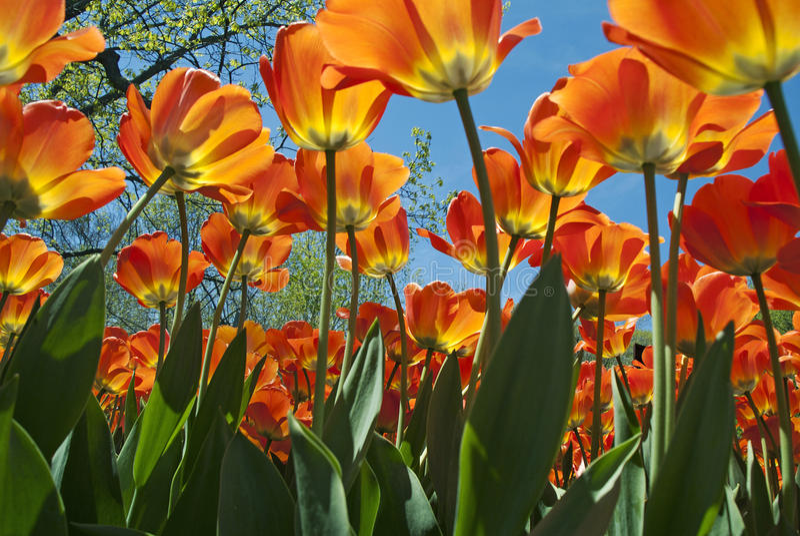 Download Molten Color stock image. Image of vibrant, multi, colored - 30265199