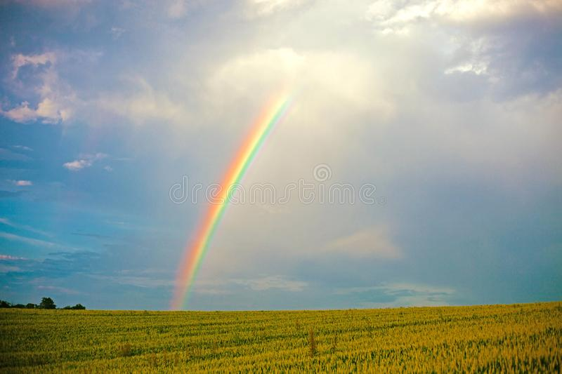 Vibrant natural rainbow in the dramatic blue sky over the summer green field royalty free stock photography