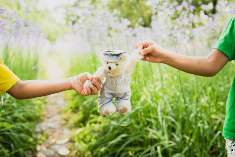 Vibrant outdoor photo of teddy bear sitting on the yard at the park with the white flower. And green grasses stock images