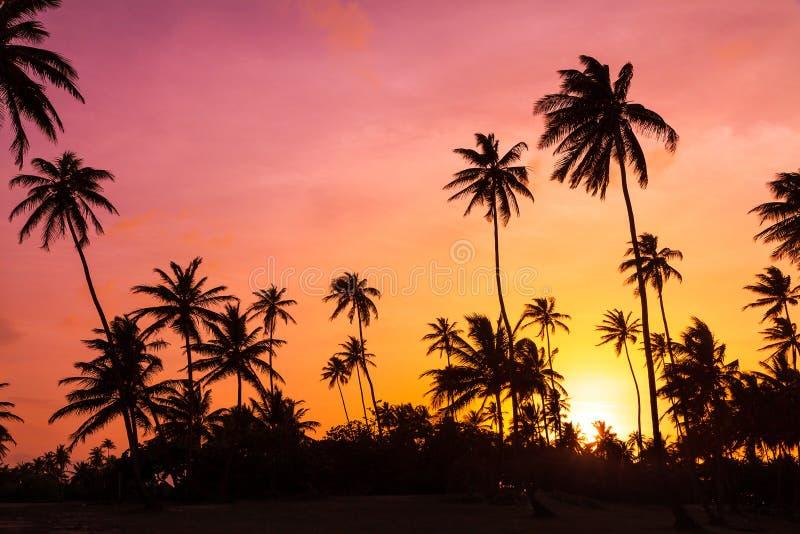 Vibrant palm sunset royalty free stock photos