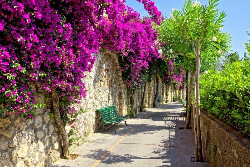 Walkway of vibrant purple flowers in Capri, Italy. Vibrant purple flowers lining a walkway with bench on the beautiful island of Capri, Italy stock photos
