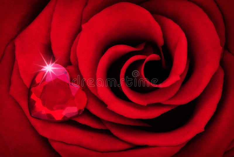 Vibrant Red Rose Close Up Macro with Ruby Heart royalty free stock image