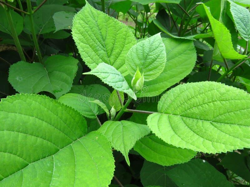 Vibrant shiny green tree bush shrub leaves. royalty free stock photos