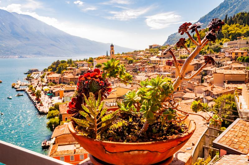 Vibrant succulents growing in a flowerpot on the balcony with Limone Sul Garda cityscape on background. Shore of Garda lake royalty free stock photo