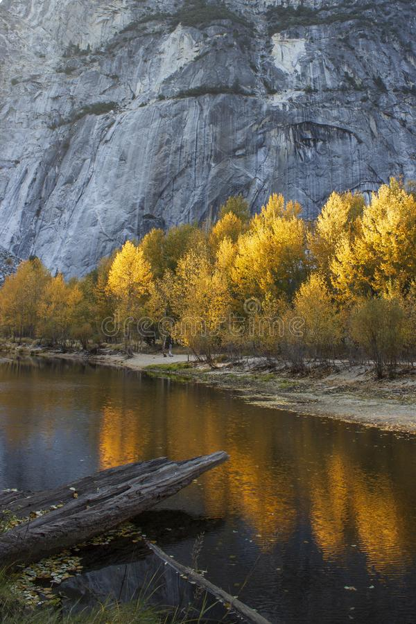 Vibrant sunlit golden trees reflected in water below rockface. Tranquil Fall scene with vibrant golden sunlit trees directly below rock face & reflected in a stock photo