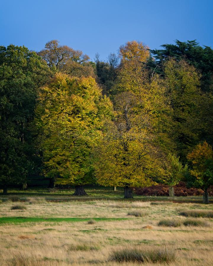 vibrant trees in Autumn royalty free stock photography