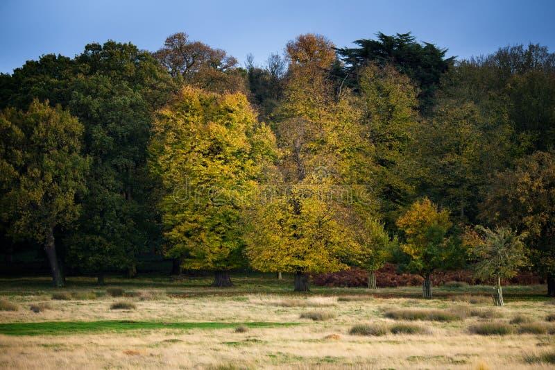 Vibrant trees in Autumn stock photo