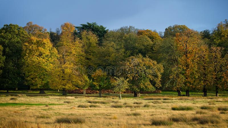 Vibrant trees in Autumn royalty free stock photo