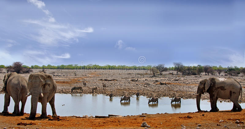 Vibrant waterhole in Etosha national park, Namibia, southern afr. Elephants, Oryx and Zebra at a busy waterhole in Etosha National Park, Namibia, Southern Africa royalty free stock image