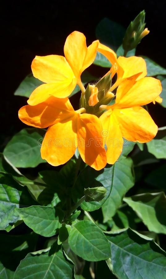 Vibrant yellow flower at the backyard stock photos