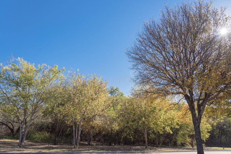 Vibrerande färg för nedgånglövverk längs floden i förorts- Dallas, Texas, USABeautiful den vibrerande staden parkerar med färg fö royaltyfria bilder