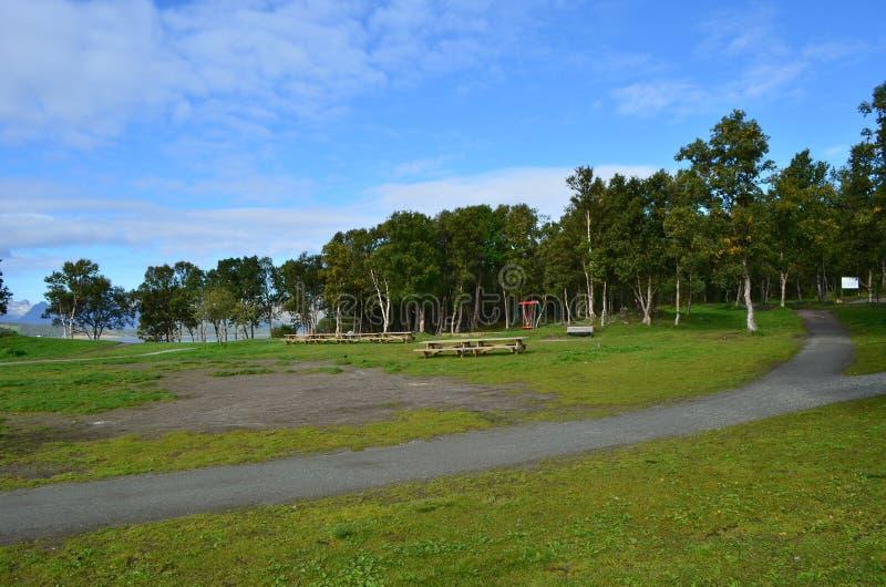 Vibrerande gräsmatta för grönt gräs med den väldiga skogen och blå himmel royaltyfri bild