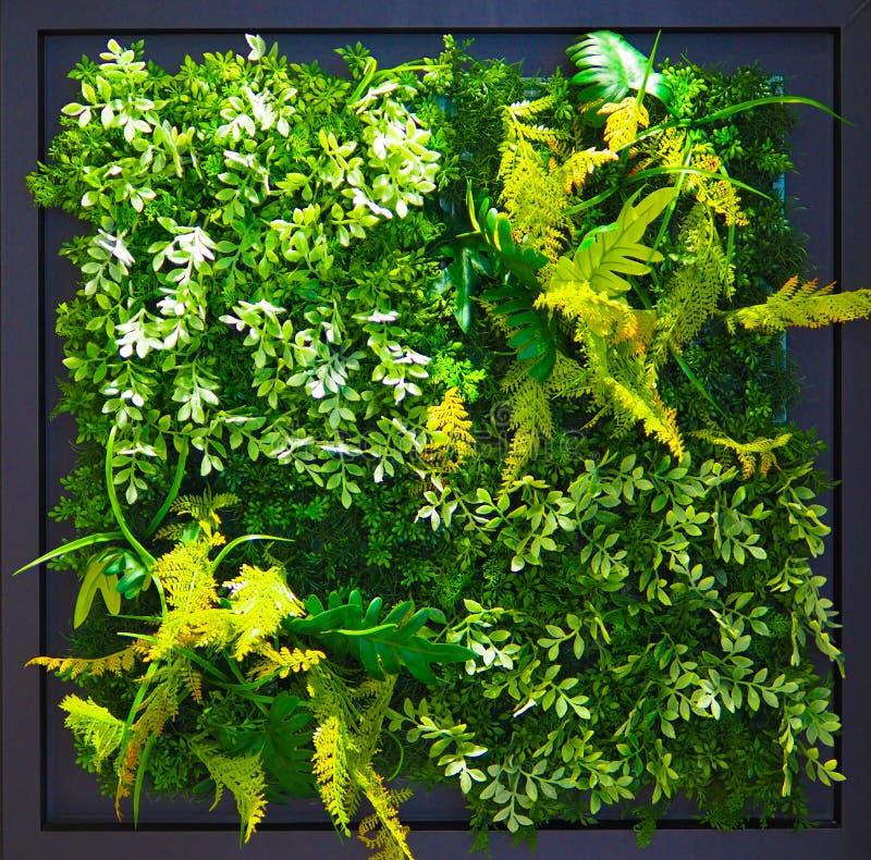 Vibrerande grön lövverk i svart växtask arkivbild