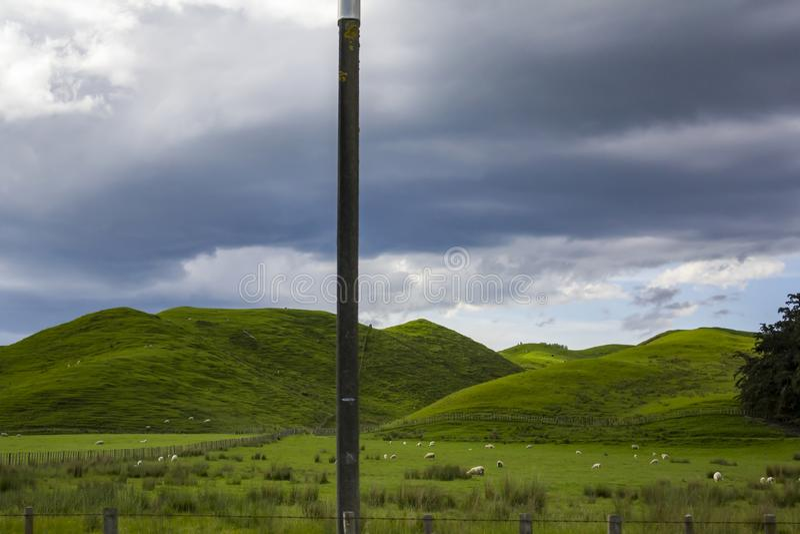 Vibrerande gröna ängar med får som betar i ett härligt nyazeeländskt landskap arkivbild
