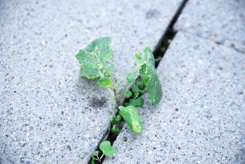 Vibrerande, gröna lösa växter som växer från ett stengolv royaltyfria bilder