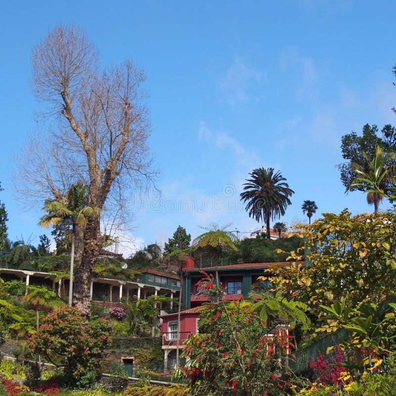 Vibrerande gröna tropiska växter och träd med färgrika byggnader i monte ovanför funchal i madeira med en ljus solbelyst himmel royaltyfri bild