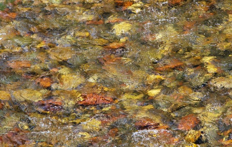 Vibrerande kristallklar bergströmbotten i Colorado arkivfoton