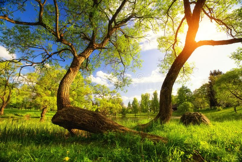 Vibrerande landskap för sommar royaltyfria foton