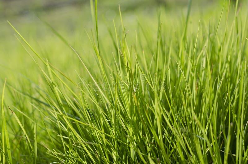 Vibrerande närbild för grönt gräs arkivfoton