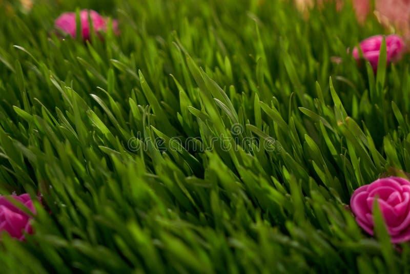 Vibrerande närbild för grönt gräs med rosa blommor fotografering för bildbyråer