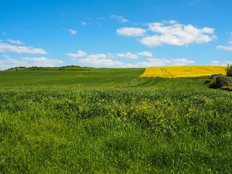 Vibrierende grüne Wiese, helles gelbes Rapssamenfeld und blauer Himmel mit Wolken in Nord-Frankreich lizenzfreies stockbild