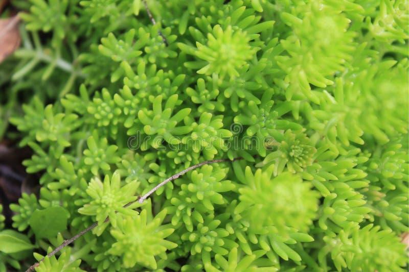 Vibrierende Grünpflanze lizenzfreies stockbild