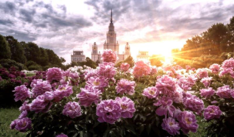 Vibrierende Weitwinkelansicht von Campus und von botanischem Garten des berühmten Russen stockbild