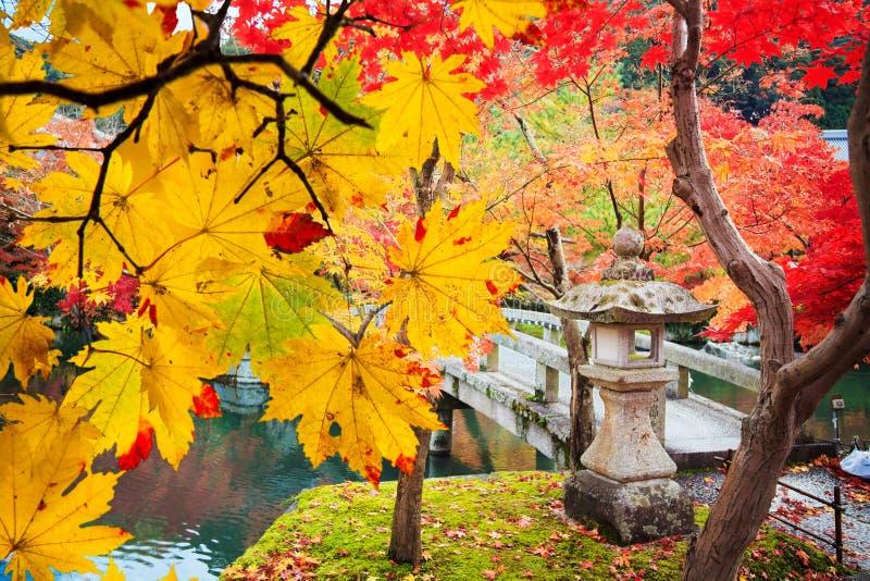 Vibrierender Baum des schönen conlorful Ahornblattes in Japan-Reise autu stockbild