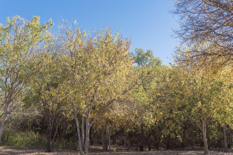 vibrierender Stadtpark mit Herbstlaubfarbe bei Sonnenuntergang in Vorstadt-Dallas, Texas, USA lizenzfreies stockfoto