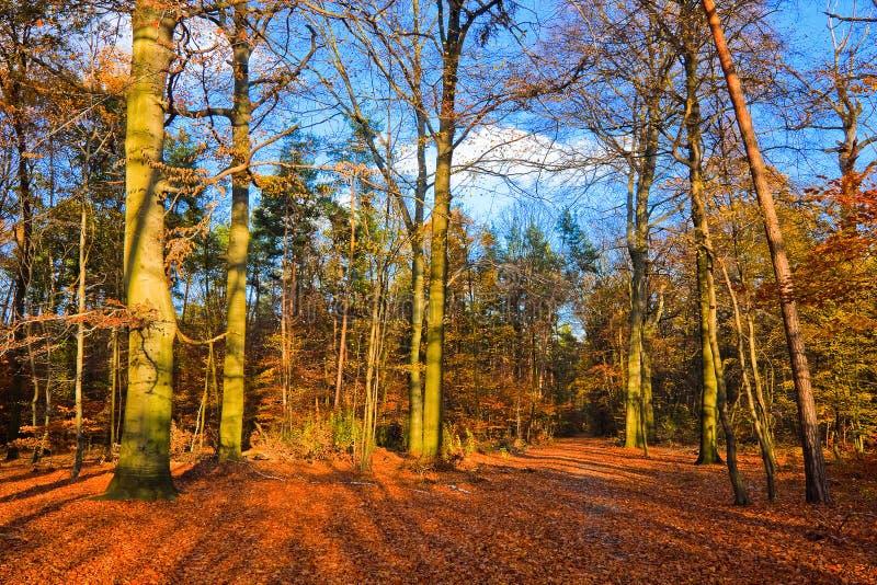 Vibrierendes Bild des Herbstparks lizenzfreies stockfoto