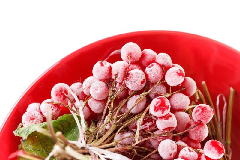 Viburno congelato sul piatto, stoccaggio di forlong-termine, fondo bianco immagine stock libera da diritti