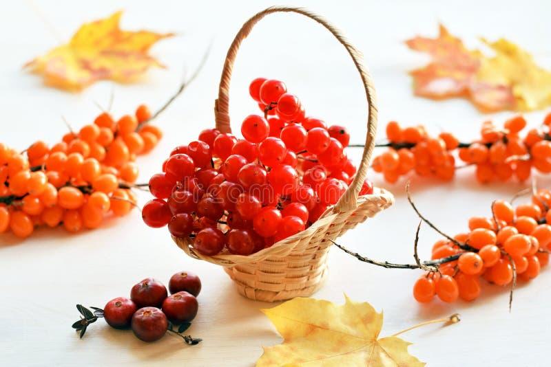 Viburnum, buckthorn i cranberry, zdjęcie stock