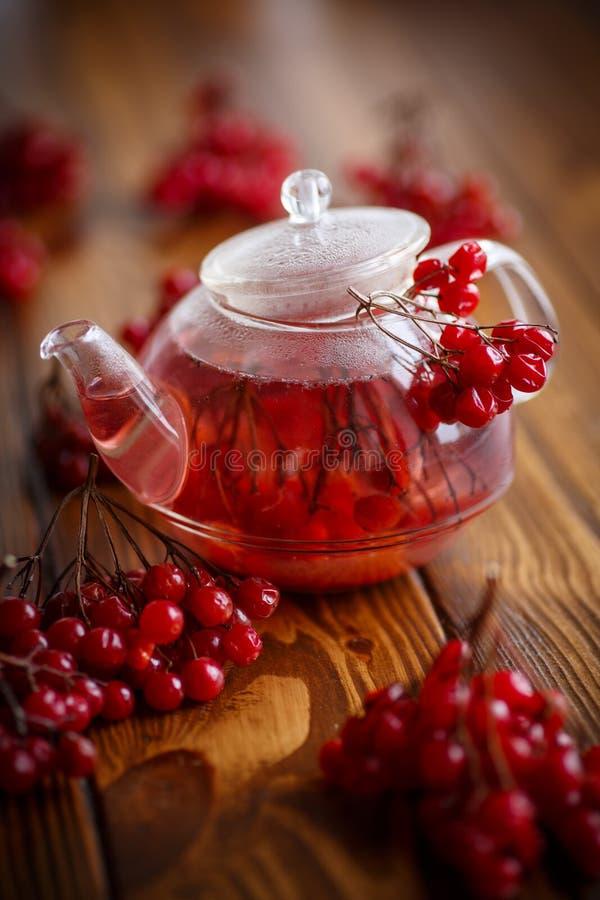 Viburnum caliente del té en el pote de cristal fotos de archivo libres de regalías
