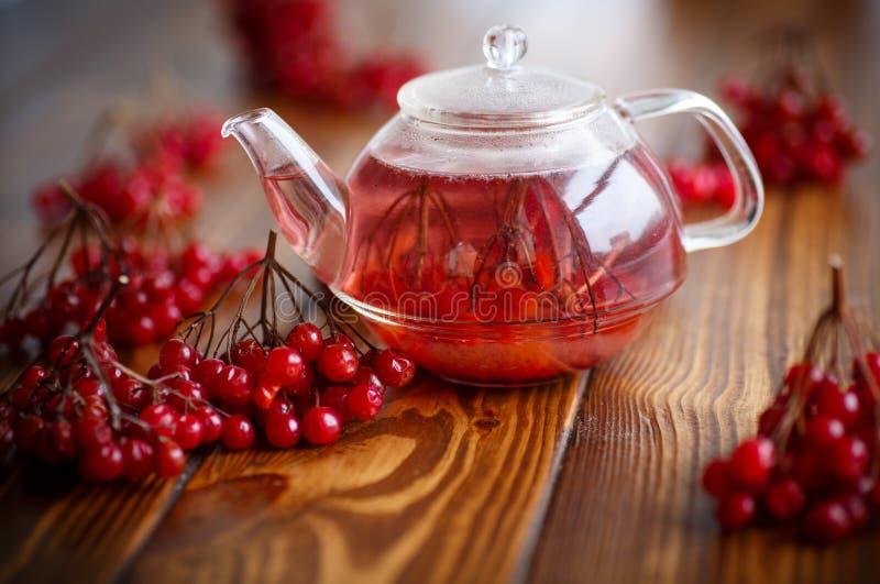 Viburnum caliente del té en el pote de cristal imagen de archivo libre de regalías