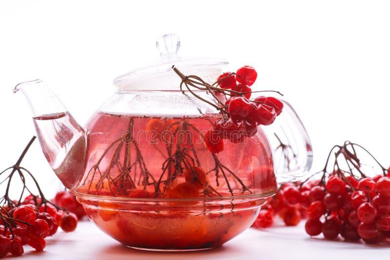 Viburnum caliente del té en el pote de cristal imagen de archivo
