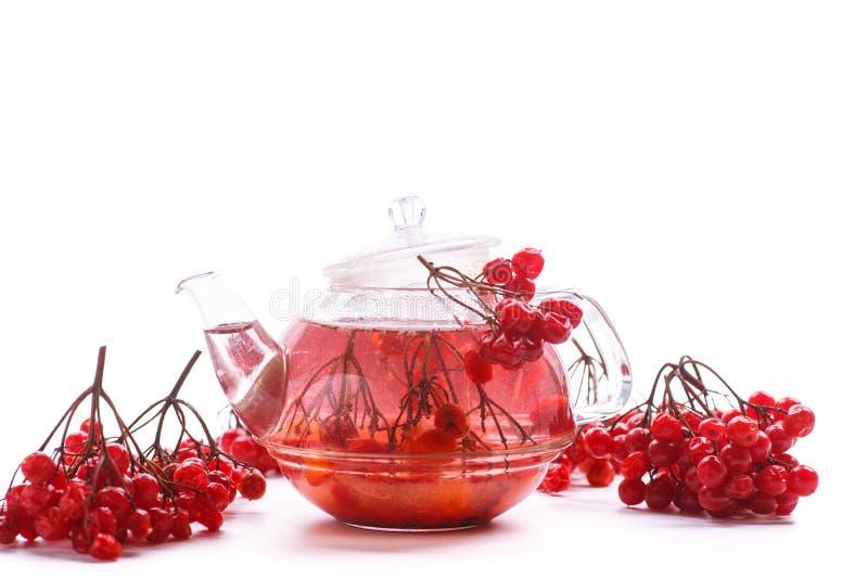 Viburnum caliente del té en el pote de cristal foto de archivo libre de regalías
