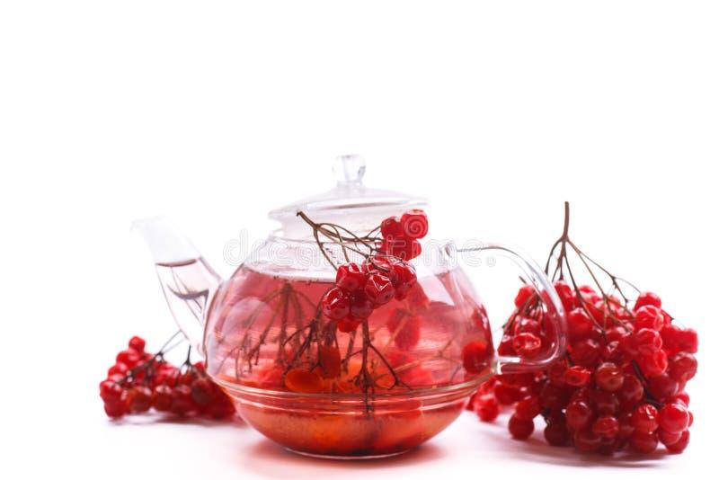 Viburnum caliente del té en el pote de cristal fotos de archivo
