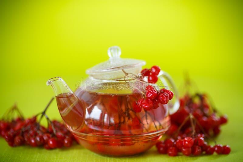 Viburnum caliente del té en el pote de cristal imágenes de archivo libres de regalías