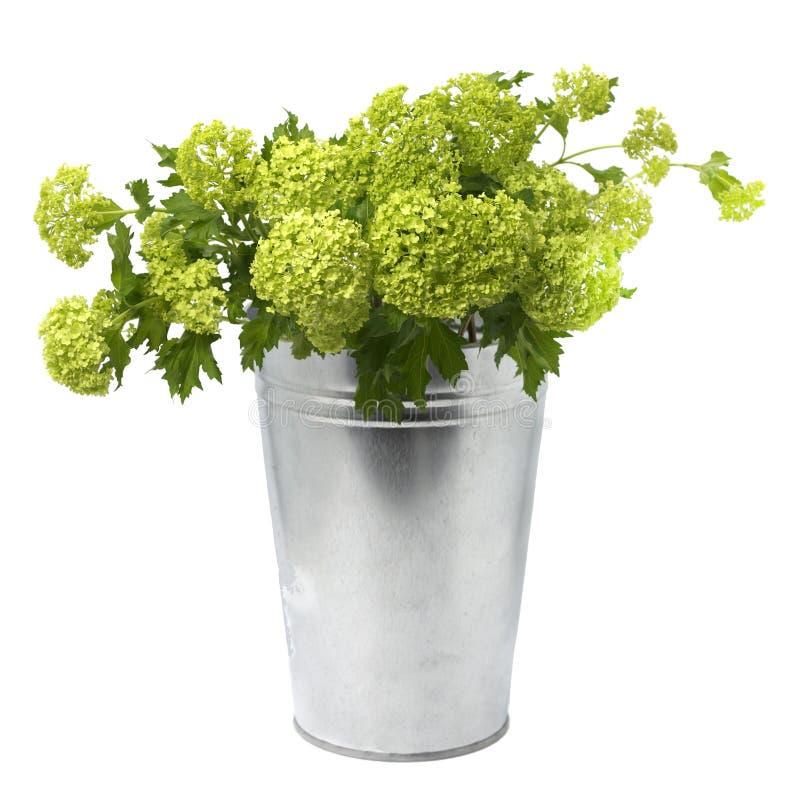 Viburnum dans un pot de fleurs en métal sur un fond floral de fond blanc photos stock