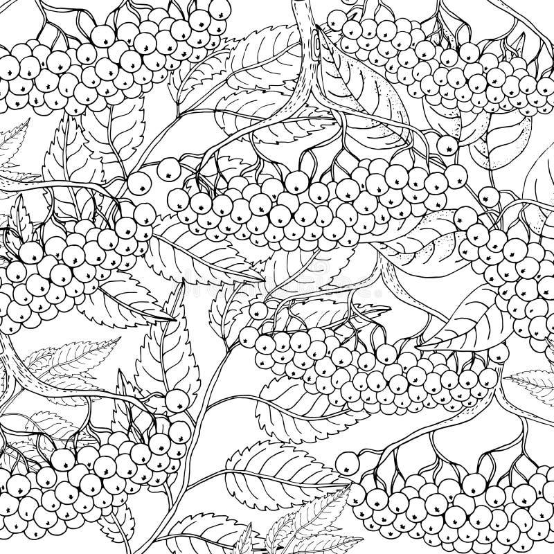 Viburnum floral colorido lindo fijado en el ejemplo exhausto del vector de la mano blanca del fondo ilustración del vector