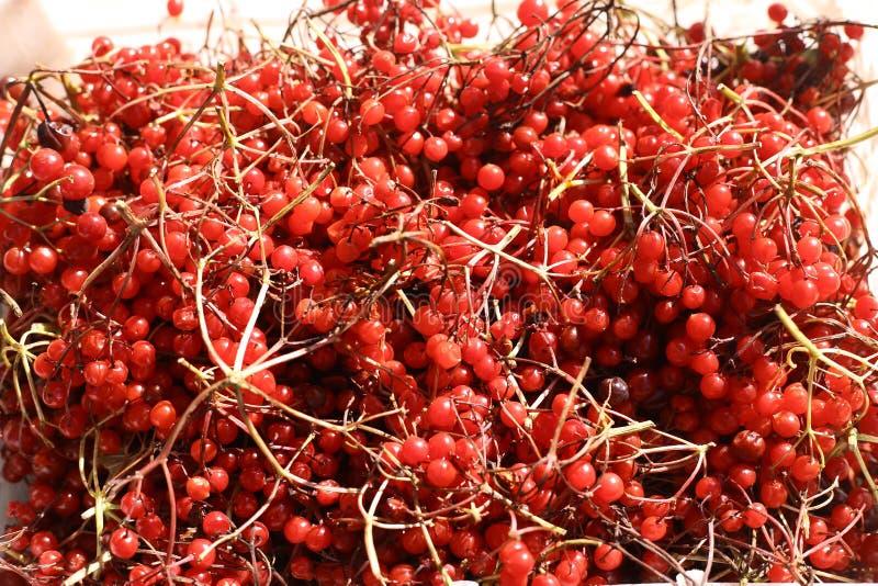 Viburnum guelder tekstury różany tło zdjęcie stock
