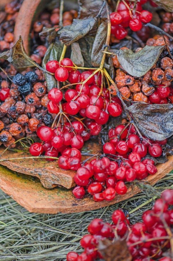Viburnum und schwarzer Chokeberry stockbilder